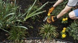 manutenzione aiuole, giardinieri, abbellimento giardini