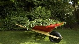 Beschneiden von Hecken, Grünflächenpflege, Gartenpflegeq
