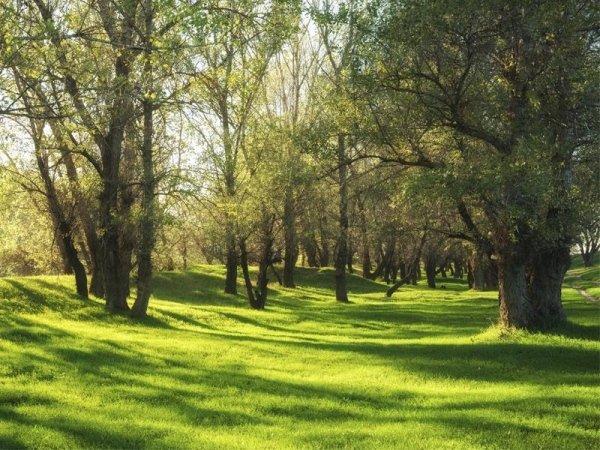 manutenzione aree boschive