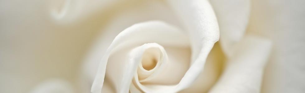 composizioni floreali napoli