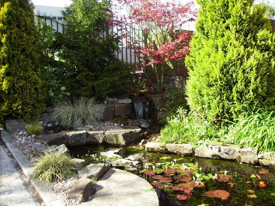 For aquatics pond and fish supplies in leyland choose for Garden pond specialists