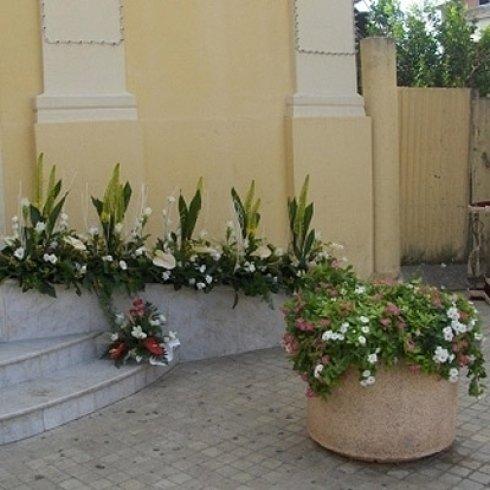 tulipani, rododendri, piante ornamentali