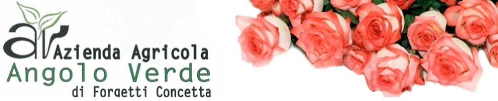 ANGOLO VERDE - logo