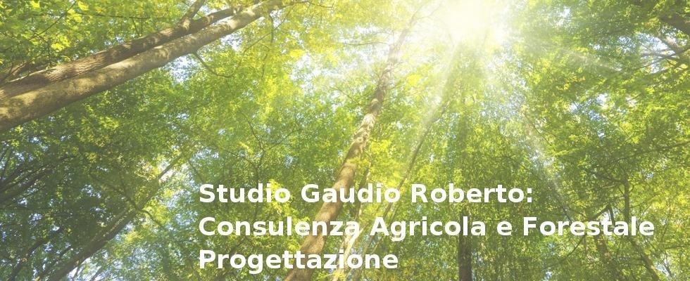 Studio Gaudio Roberto