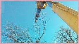 spostamento alberi