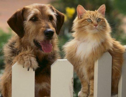 cane e gatto di razza
