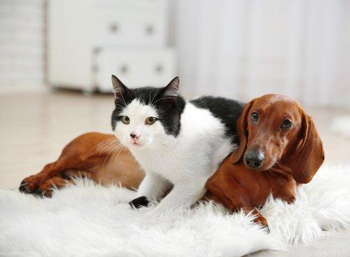cane con gatto