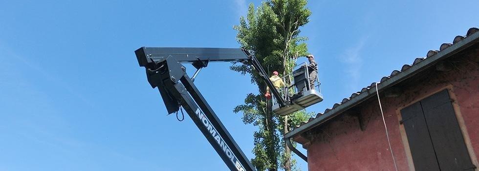 potatura alberi alti treviso