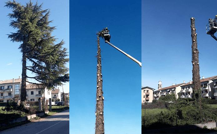 potatura alberi Treviso