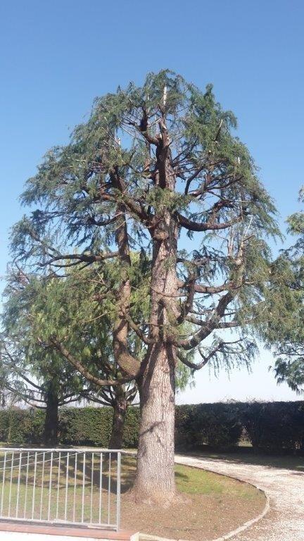 manutenzione e bonifica aree verdi Treviso
