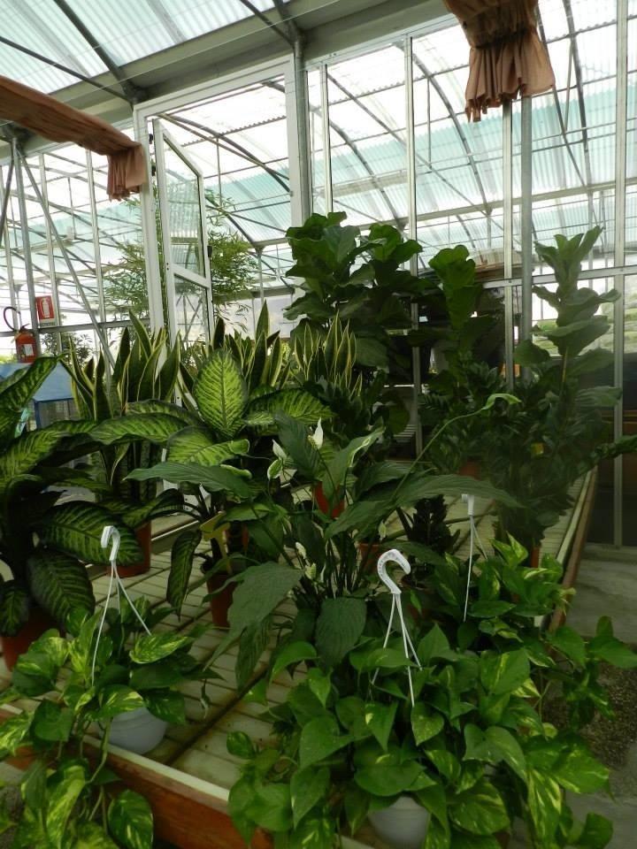 piante da interno