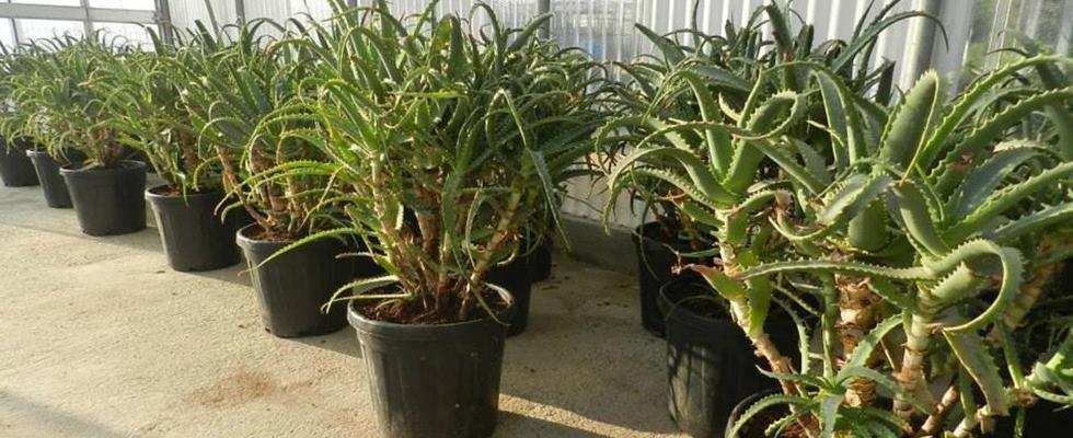vendita piante da esterno