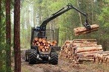 Lavori di forestazione