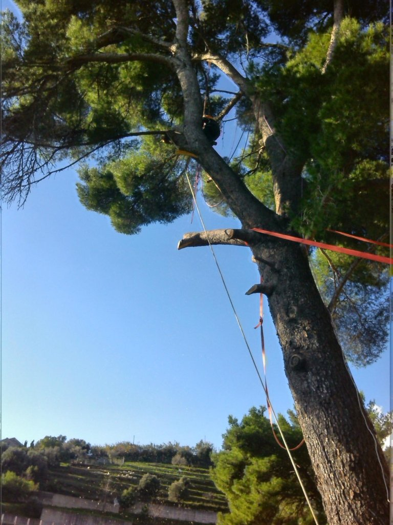 Interventi su alberi pericolanti