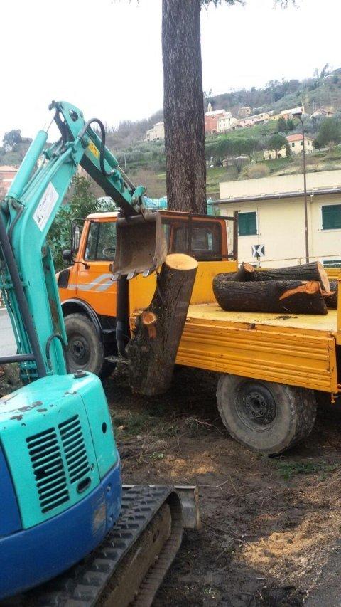 abbattimento alberi