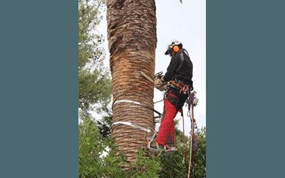 potatura alberi pubblici