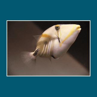 vendita pesci da acquario