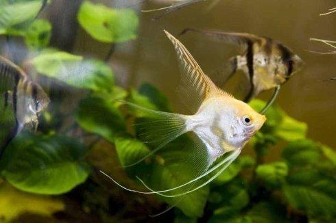 pesce giallo e bianco