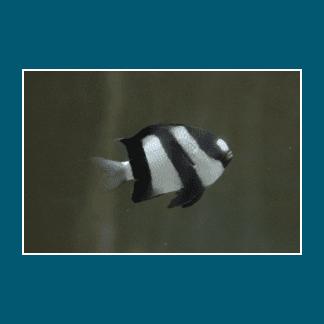 pesci da acquario