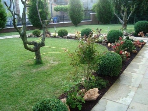 giardino con rocce e albero