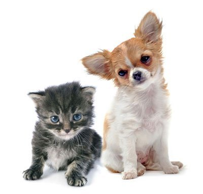 pet kitten and puppy