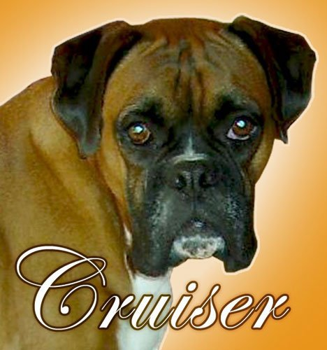 cruiser paul