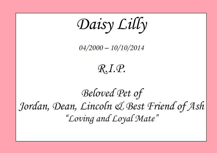 daisy lilly