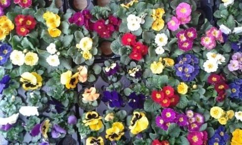Terriccio biologico fiori e piante