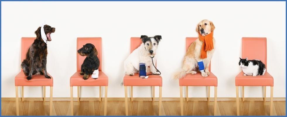 Diverse razze di cani seduto sulla sedia