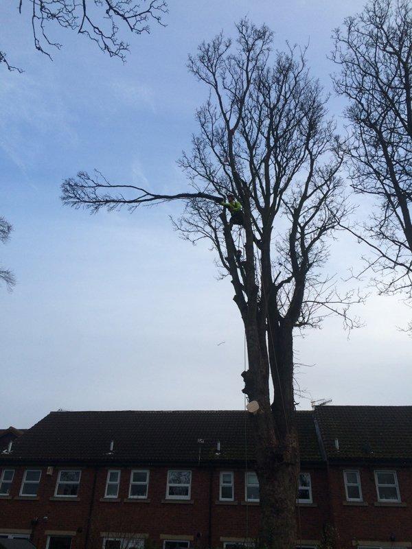 branch cutting