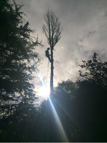 falling sun rays