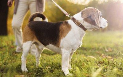 premier care pty ltd dog on grass