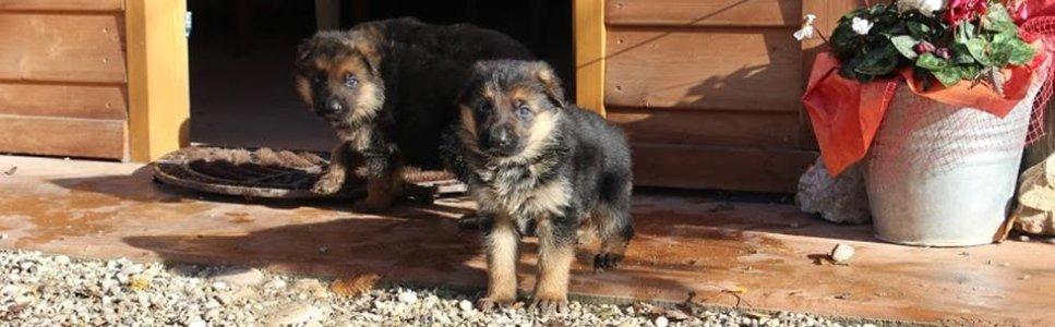 pensione cuccioli montebelluna