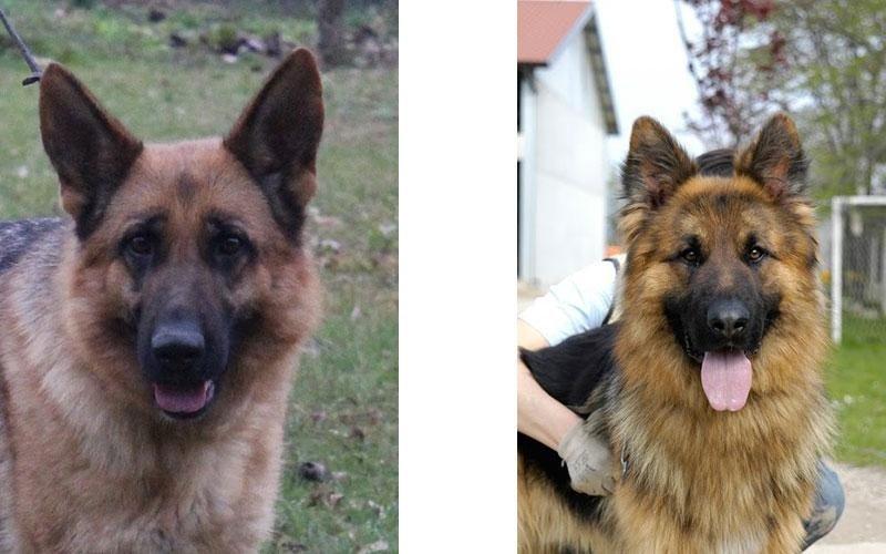 addestramento cani montebelluna