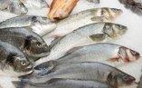 servizio pulizia pesce, pesce pronto, pesce da cucinare