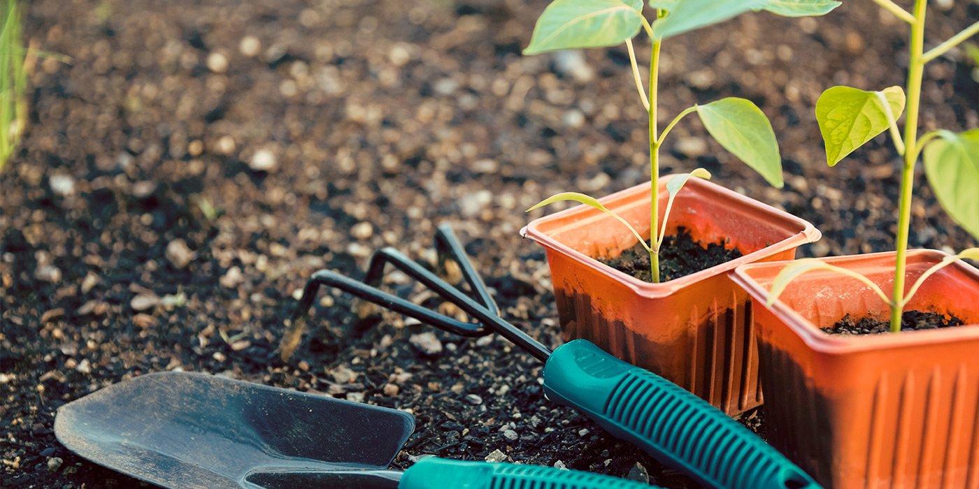Piantine nei vasi piccoli pronti per essere impiantate in giardino, attrezzi di giardinaggio