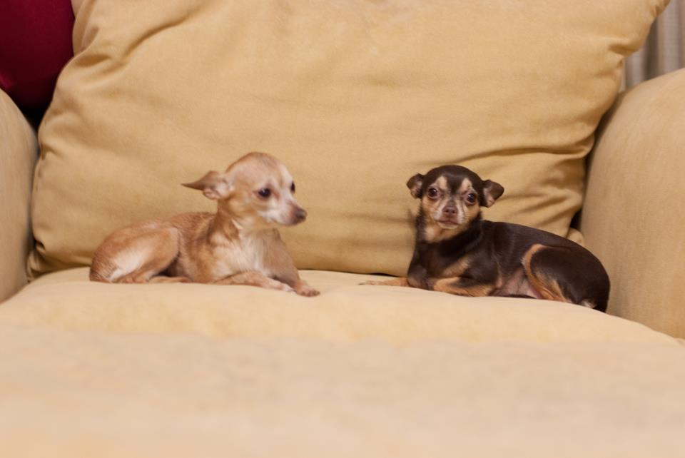 Gracie and Lola