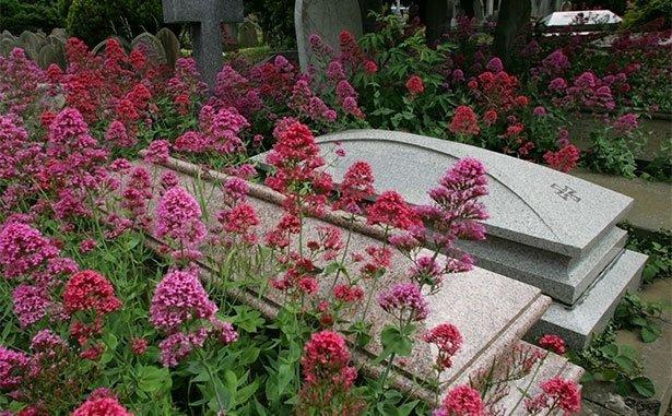 Fiori rosa accanto  delle tombe