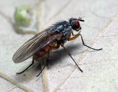 how to stop flies from flying around you