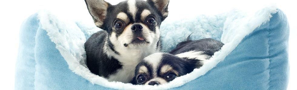 vendita cucce per cani ascea