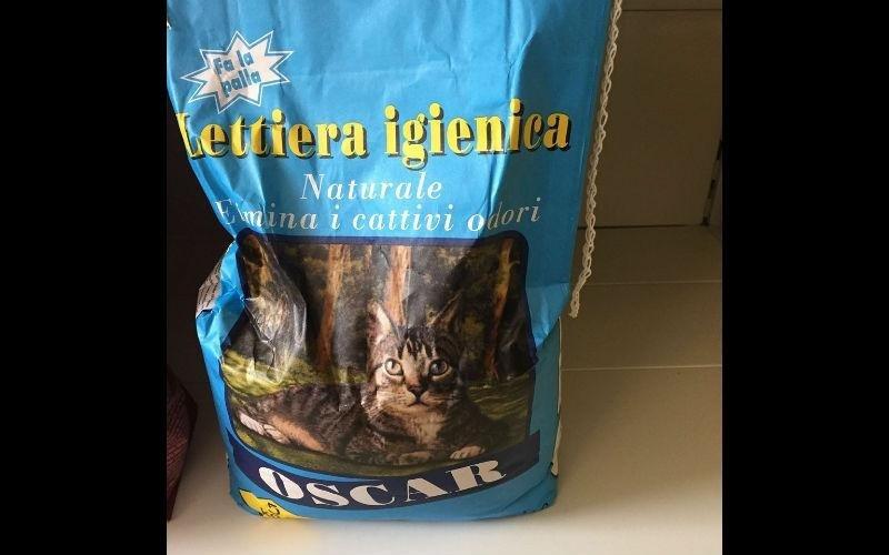 lettiera per gatti salerno