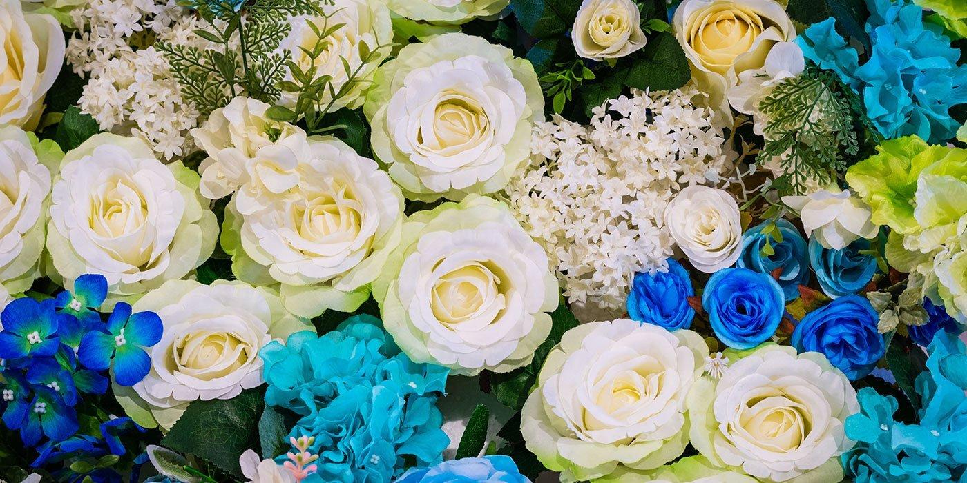 insieme di tante rose bianche e blu