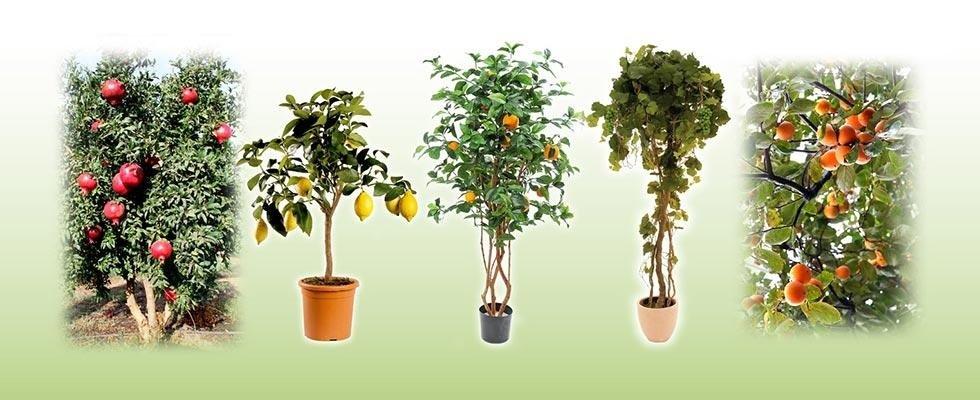 Piante di agrumi, vite e frutti vari