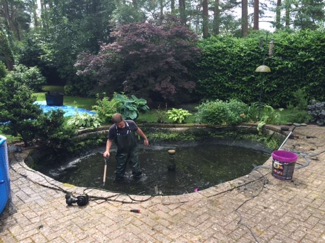 Pond Skimmers
