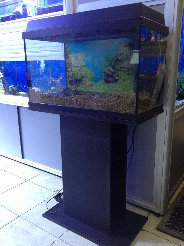 bespoke aquarium services