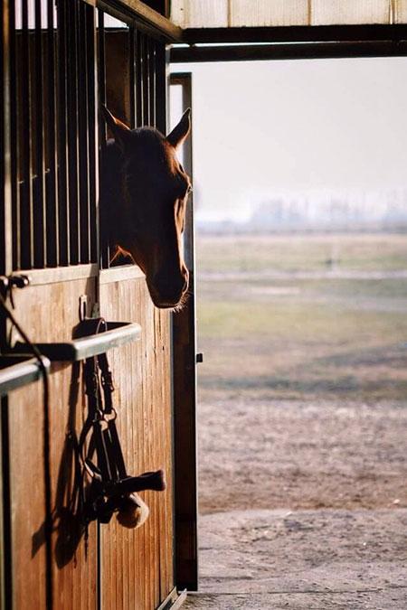 un cavallo in una stalla