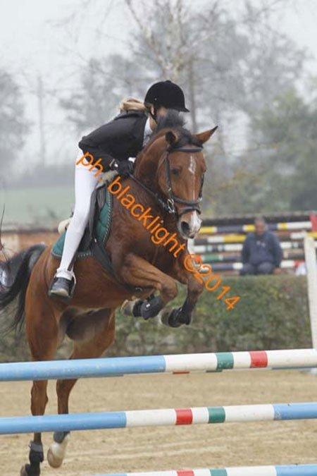 una ragazza su un cavallo durante il salto agli  ostacoli