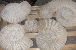 materiali fossili
