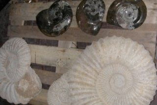 blocchi fossili
