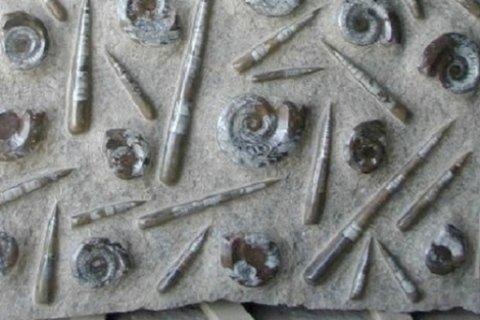 pietre fossili